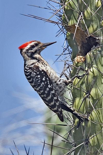 Motherfucking woodpecker.