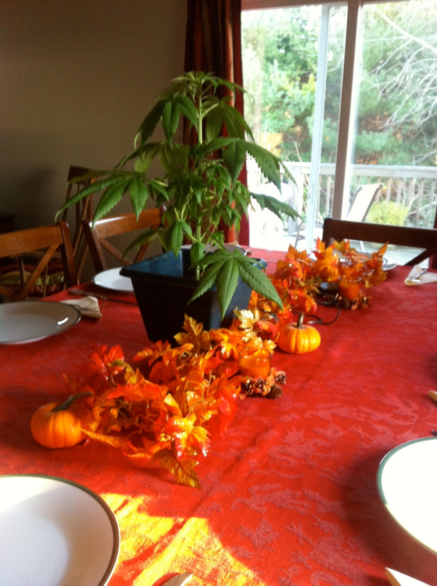 """Yeah, nice """"tomato plant"""" centerpiece. Aunt Cheryl was not thrilled."""